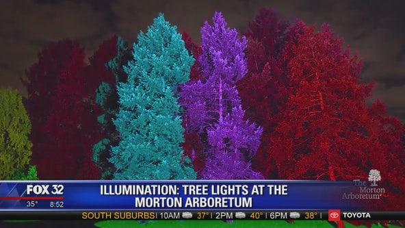 Get in the festive spirit at Illumination: Tree Lights at The Morton Arboretum