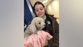 Dog thrown from moving car, 'left to die' on South Side is expected to recover