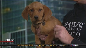 Mike's Perfect Pets: Ozzy