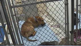 Illinois treasurer returns nearly $20K woman left to local animal shelter
