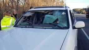Deer killed after crashing through driver's windshield