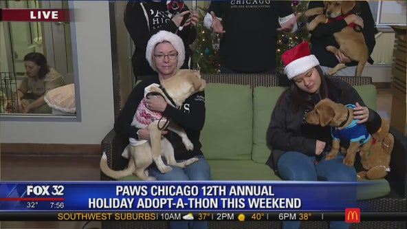 Dozens of pets looking for forever homes at PAWS Chicago Holiday Adopt-a-thon