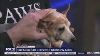 Mike's Perfect Pets: Glenda