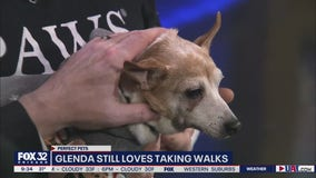 Mike's Perfect Pets: Glenda
