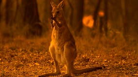 Australian wildfires kill 24 people, at least half a billion animals