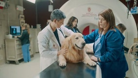 Man buys $6M Super Bowl ad to thank veterinarians who saved his dog's life