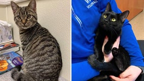 Officials: 2 'terrified' cats found inside plastic bags along Pa. road