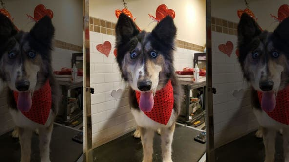 Jubilee, a shelter dog with 'weird' eyes, finds forever home after going viral on Facebook