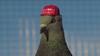 Prank group releases pigeons with MAGA hats over Democratic debate in Las Vegas