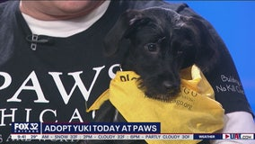 Mike's Perfect Pets: Yuki