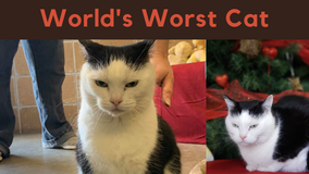 Perdita, 'World's Worst Cat,' gets adopted after snarky Facebook ad