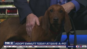 Mike's Pefect Pets: Emmutt