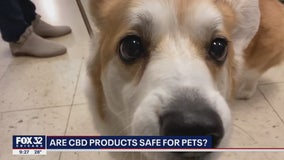 Are CBD products safe for pets? Owners swear by it