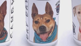 3 years after going missing, St. Paul woman recognizes lost dog on side of beer can from Florida brewery