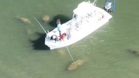 Bay Area boat captain says he wasn't harassing manatees in drone video; FWC investigating
