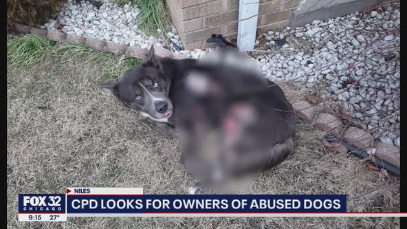 2 severely abused dogs found outside in Chicago, left for dead