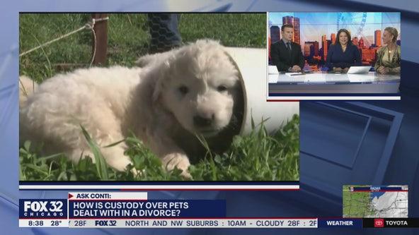 Ask Karen Conti: Legal questions about pets