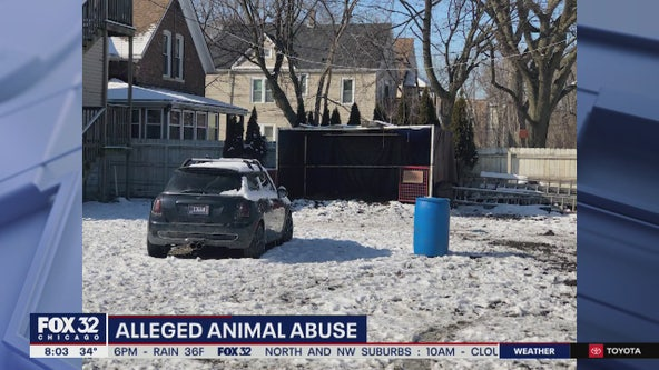 Horse found dead, another injured in Englewood yard