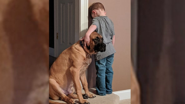 Photo of dog keeping boy company during time-out goes viral