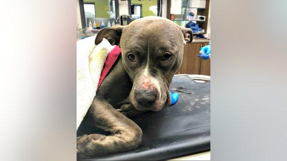 PETA offers $5,000 reward for info on abandoned dog found in trash bag