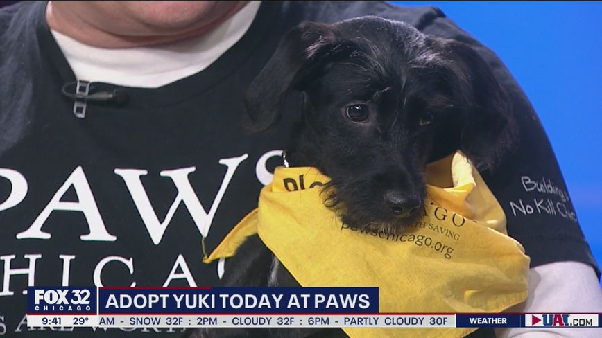 Mike's Perfect Pets: Yuki