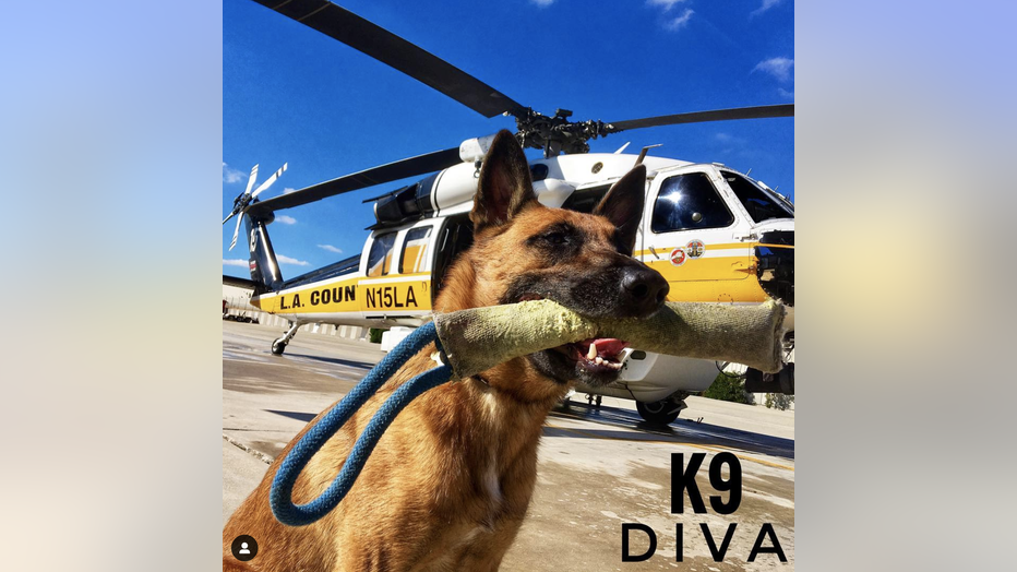 LACOFD-Search-Dog_3.png