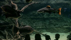 Go on a home safari: Zoos, aquariums offer live streams of animals online