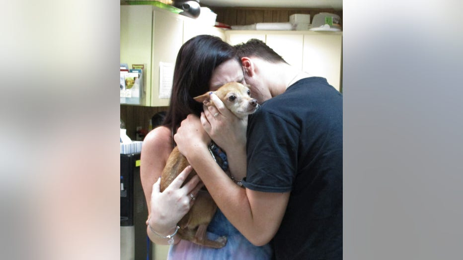 Chihuahua-Reunion.jpg