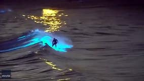 Surfer rides surreal bioluminescent waves off California coast