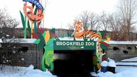 Brookfield Zoo cuts 56 positions as facilities remain closed