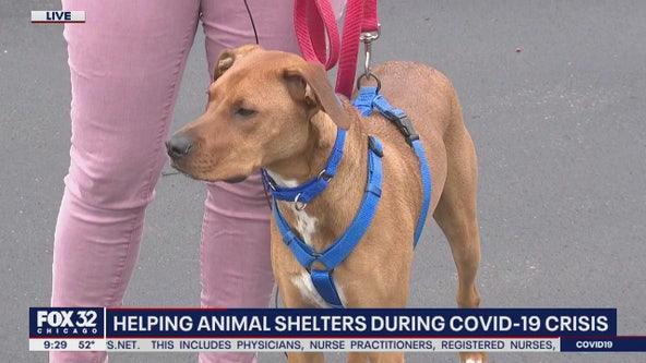 Helping out animal shelters during coronavirus shutdown