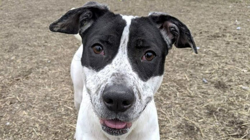 Chicago animal shelter officially out of adoptable dogs for first time