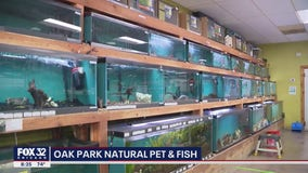 Lovin' Local: Oak Park Natural Pet & Fish just keeps swimming during pandemic