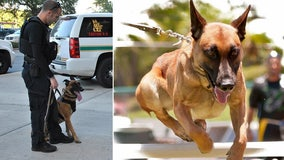 St. Pete's retired K9 'Justice' passes away after years of serving city