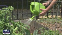 Community garden without water after paying City of Chicago $1,700