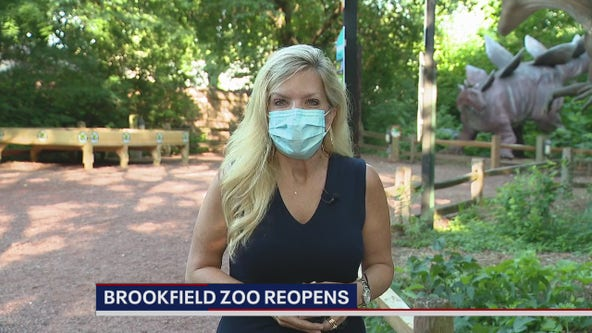 Brookfield Zoo reopens to public with added precautions
