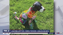 Dogs on the Bluff celebrates 125 years of incorporated Lake Bluff in colorful fashion