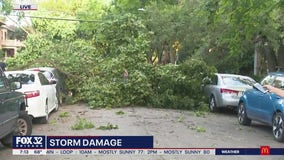 Storm damage clean-up begins around Chicagoland as clear skies return