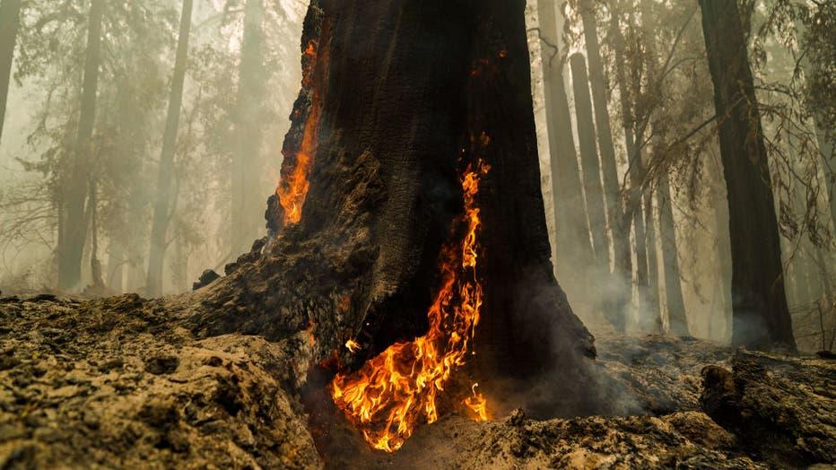 CZU August Lightning Complex Fires tears through Big Basin Redwoods State Park