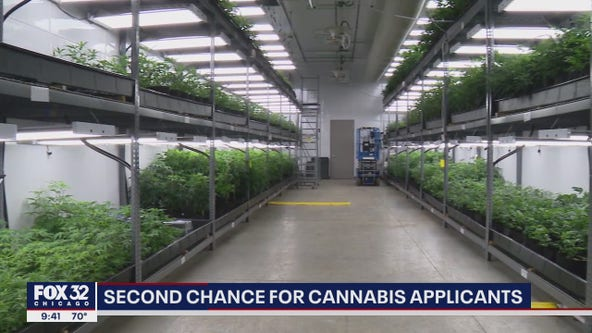 After complaints, Illinois revises process of applying for marijuana license