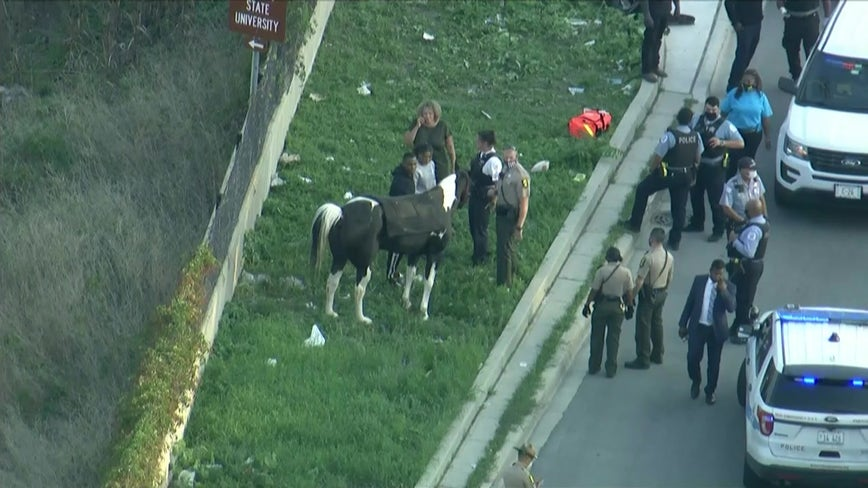 Man on horse taken into custody after snarling traffic on Dan Ryan