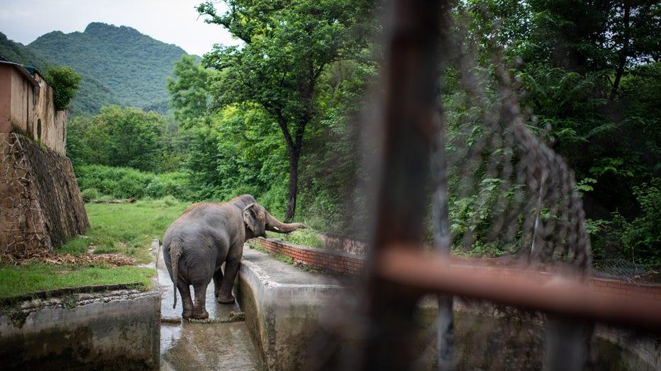 Elephant Kaavan in Pakistan