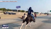 Chicago's 'Dread Head Cowboy' says he fired his attorney, still hasn't been reunited with horse