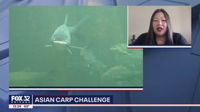 Asian Carp Challenge aims to reintroduce pesky fish to the diets of Chicagoans