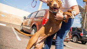 Arizona dog finally adopted after spending more than 400 days in Wickenburg shelter