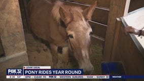 Lovin' Local: Sarah's Pony Rides