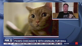 PAWS Chicago's 19th Annual Fur Ball takes virtual twist during the pandemic