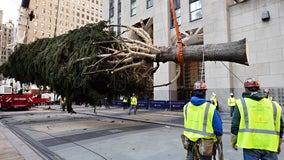 Christmas tree arrives at Rockefeller Center in New York