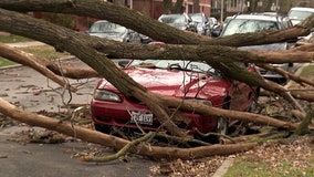 Strong winds knock down trees in Chicago area, smashing cars and damaging property