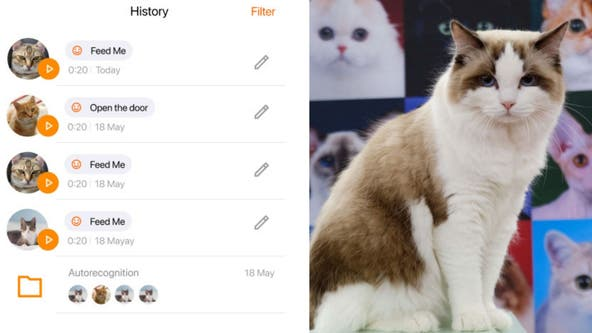 'MeowTalk': App deciphers cat's mood from meows